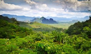 Thailand: Exotische Rohkost Erlebnisreise