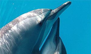 Ägypten: Yoga Delphin Reise